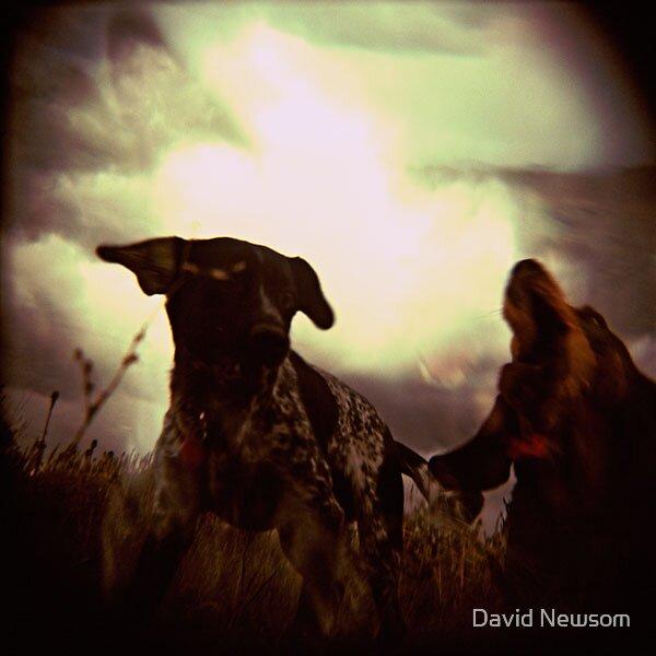 Dogfight by David Newsom