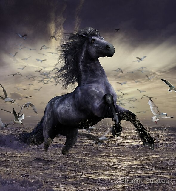 The Water Horse by Shanina Conway
