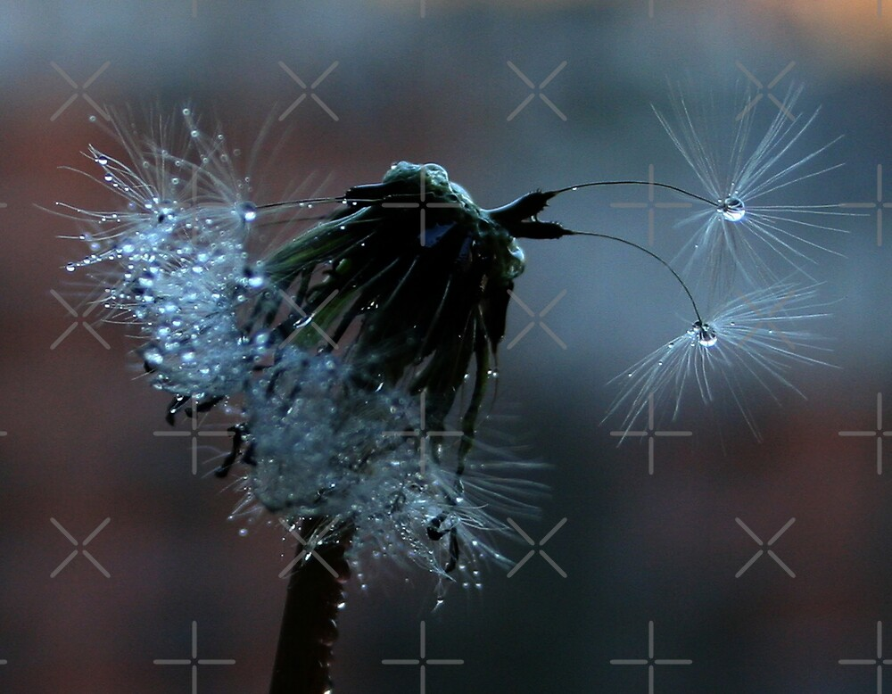 Glistening by Twilight by Ingrid Beddoes