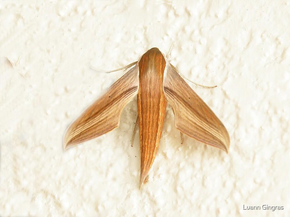 Tersa Sphinx Moth by Luann Gingras