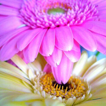fleurs pt2 by CrazyDimension