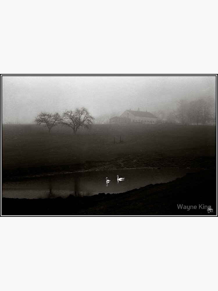 Swans on Scamman Pond by waynedking