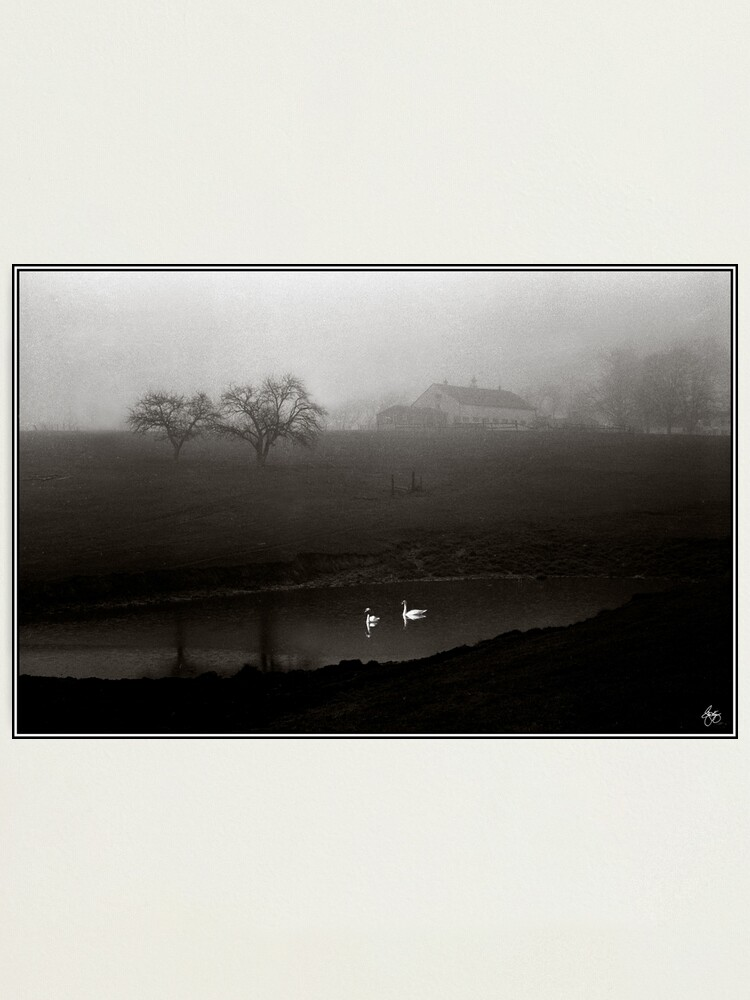 Alternate view of Swans on Scamman Pond Photographic Print