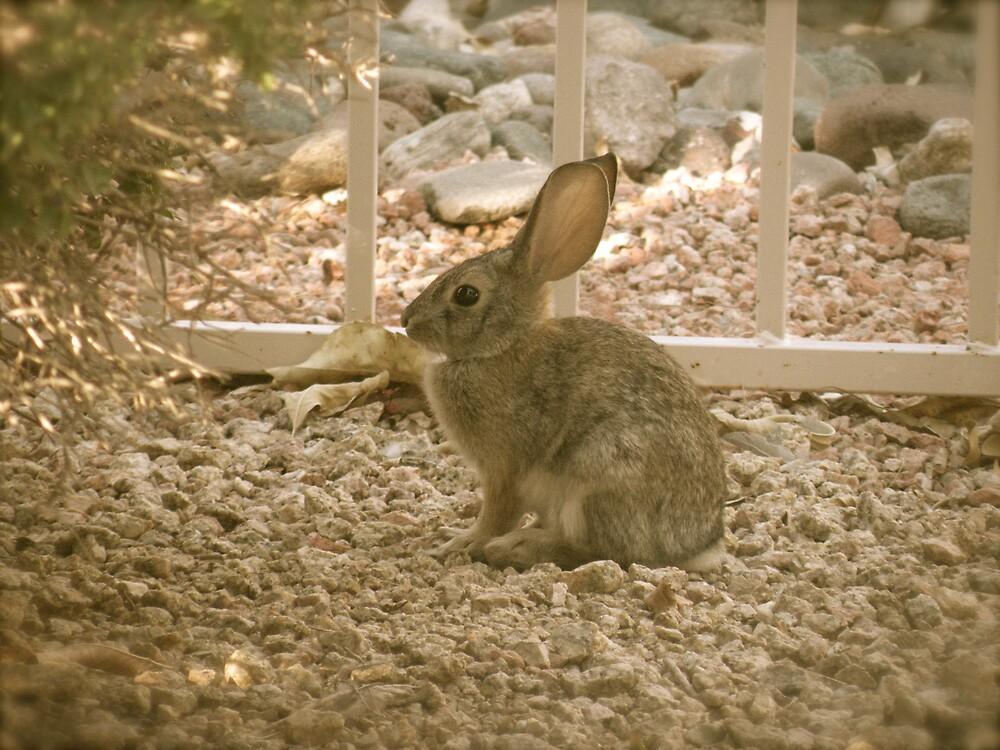 Rabbit  fun by Bonnie Pelton