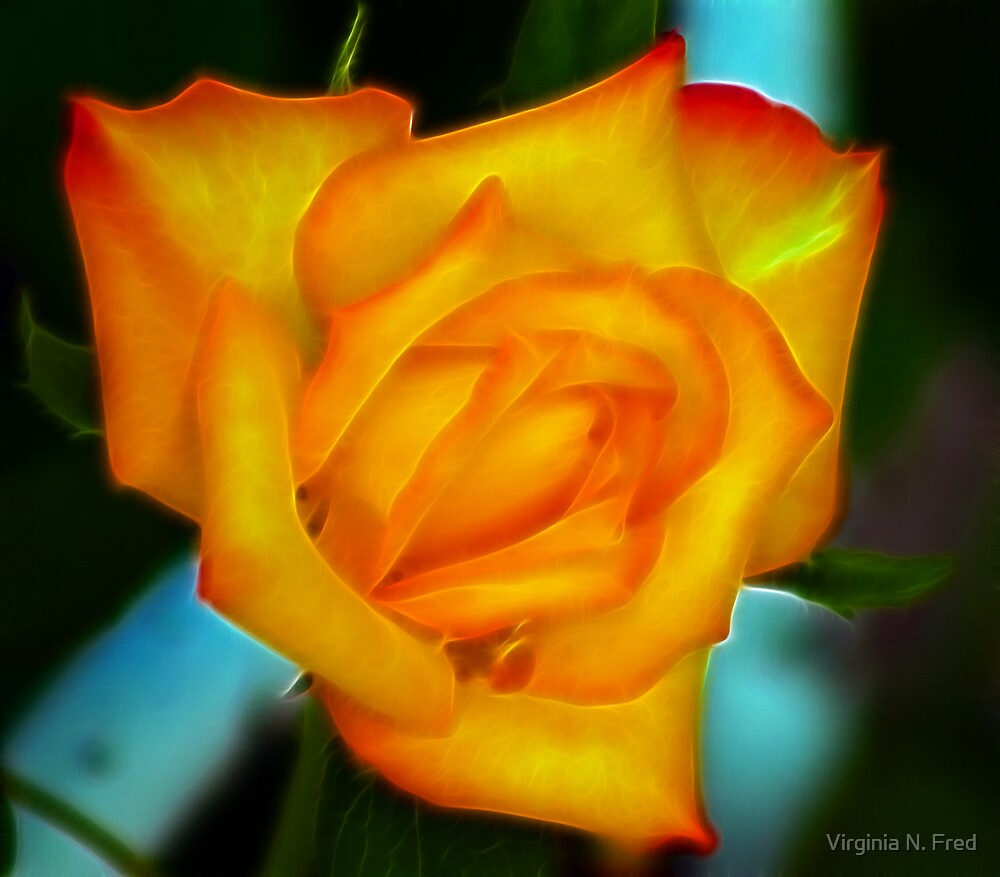 Fire Rose by Virginia N. Fred