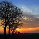 Trees in a Sunset Sky by ienemien