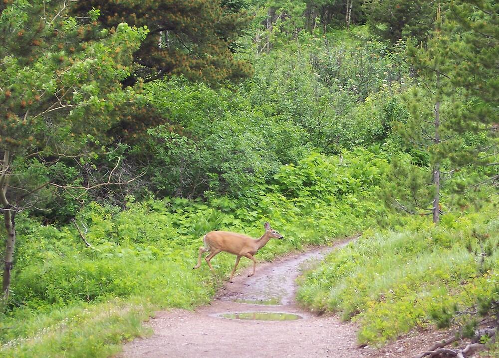 Trail Hike by Braedene