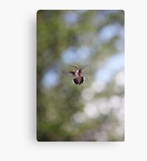 Tiny Hummingbird floating in space / Huitzilli Metal Print