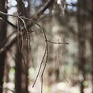 Balance & Interdependence - woodland twigs by Lizzy Doe