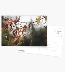 Autumn Leaves in Cambridgeshire England Postcards