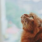 Cute Cat Looking At The Sky by Columodwyer