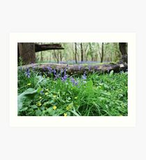 Bluebell wood in Cambridgeshire, England Art Print