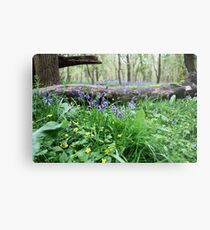 Bluebell wood in Cambridgeshire, England Metal Print
