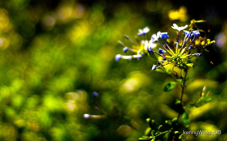 spring time by kennyWinny08