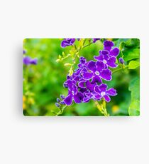 Purple over Green Canvas Print