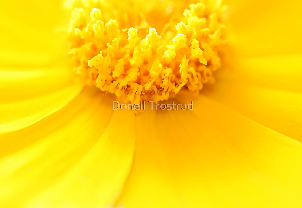 A Heart of Gold by Donell Trostrud