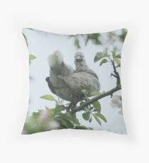 Baby collar dove in apple blossom Throw Pillow