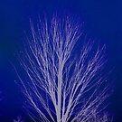 Winter Tree by Mike Solomonson