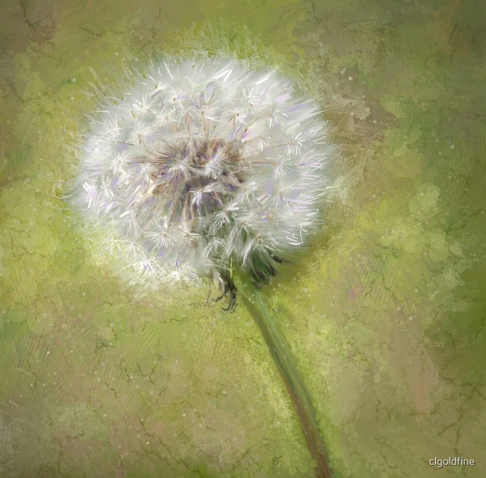 dandelion by clgoldfine
