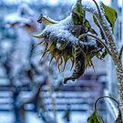 First Frost Winter Trossle  by Barry W  King