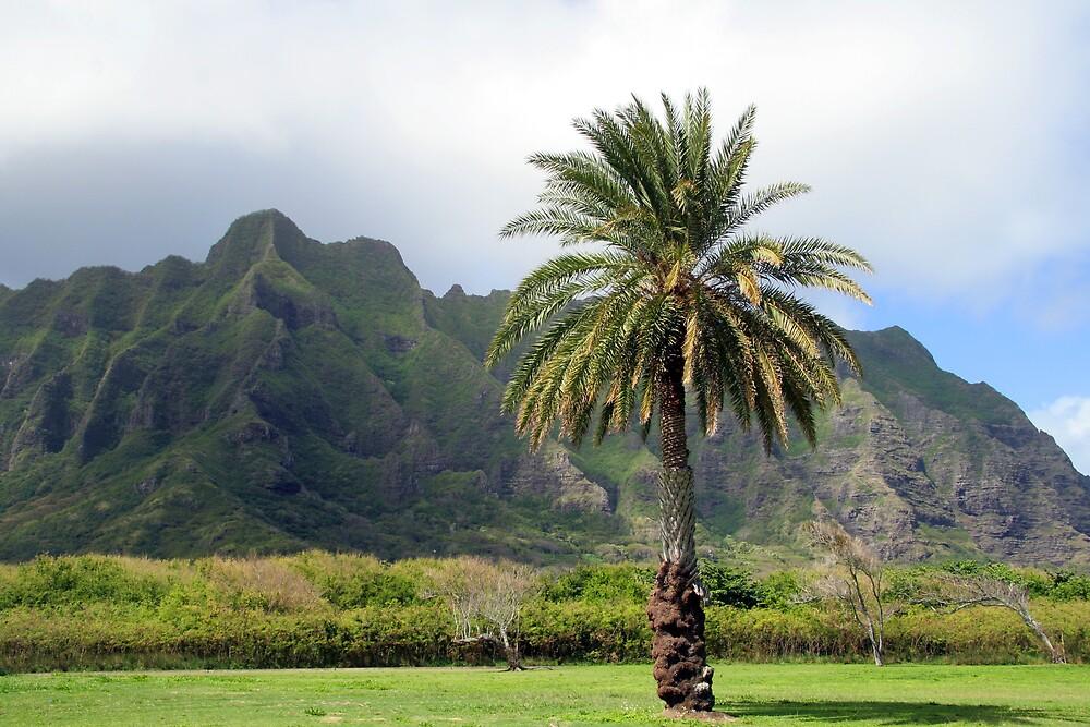 Kualoa Park, Oahu by noffi