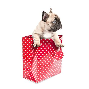 Gift Wrapped Frenchie by ernest123