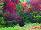 Red October by NatureGreeting Cards ©ccwri