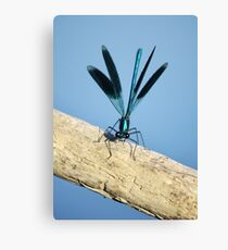 Damselfly on La Vienne river, Loire, France Canvas Print