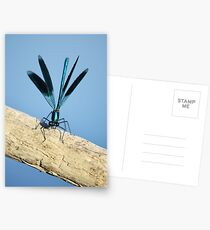 Damselfly on La Vienne river, Loire, France Postcards