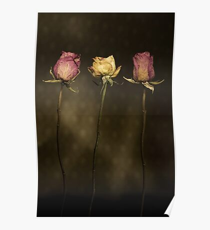 3 Roses Poster