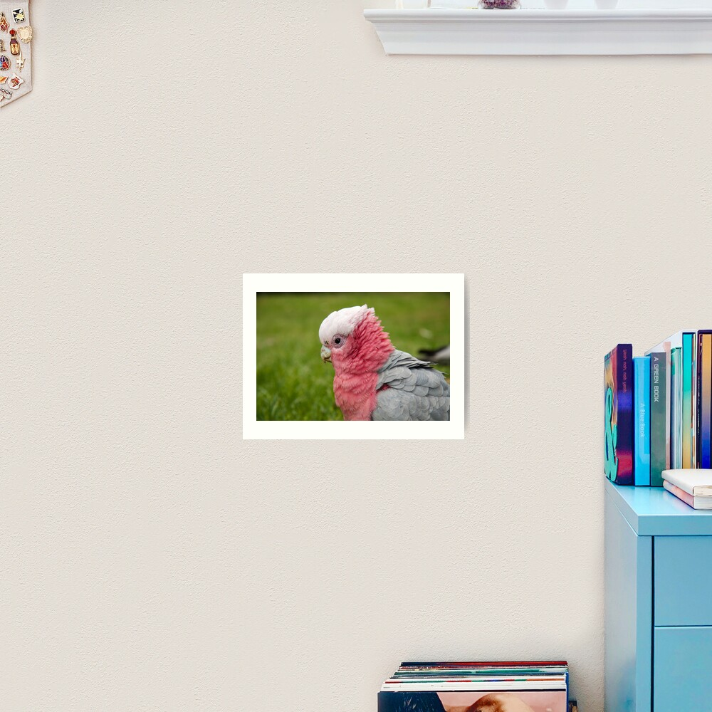 Ruffling his feathers Art Print