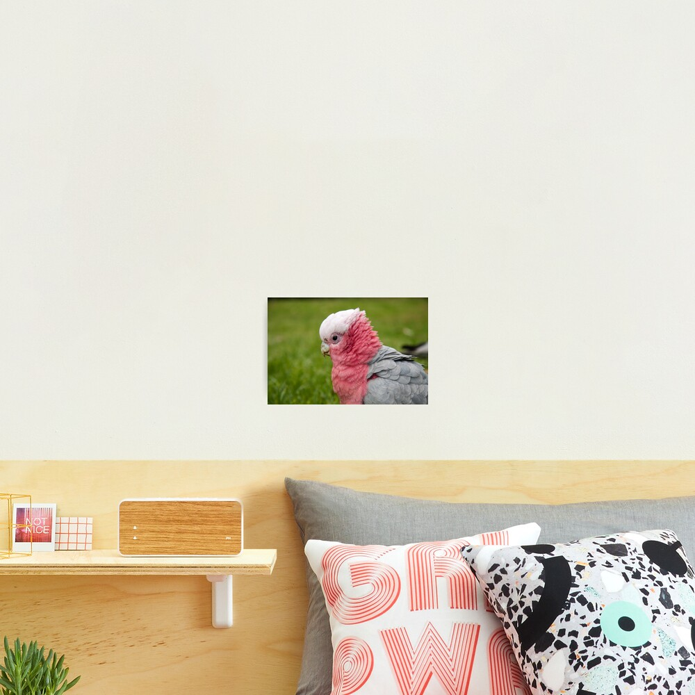 Ruffling his feathers Photographic Print