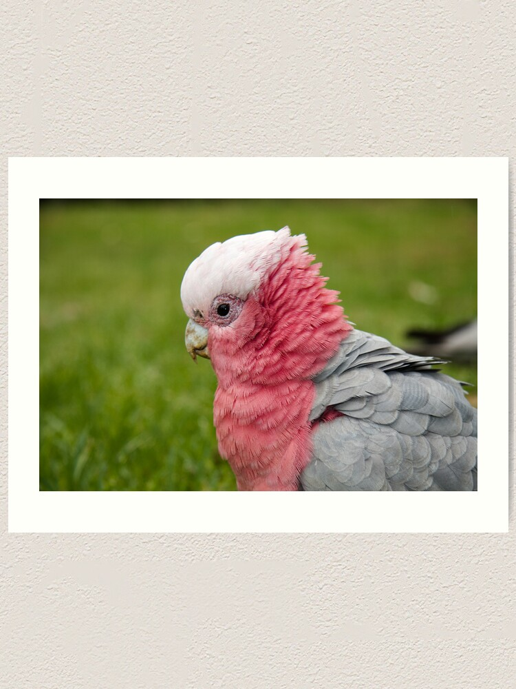 Alternate view of Ruffling his feathers Art Print