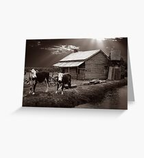 Cow and shed Greeting Card