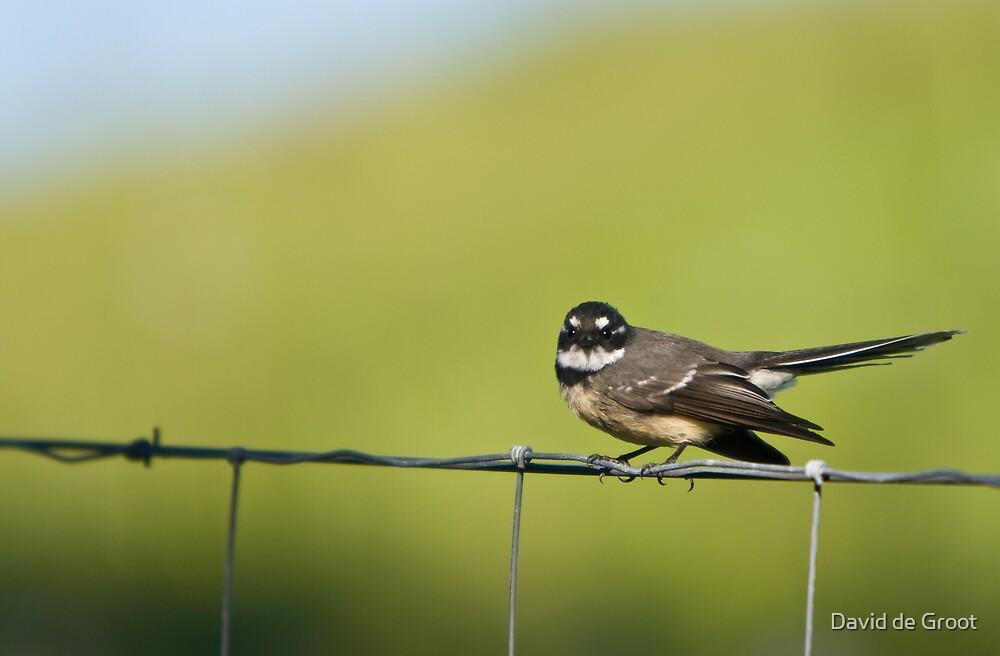 Angry Little Bird by David de Groot