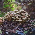 Woodland fairy mushrooms in Thetford forest, England by Lizzy Doe