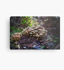 Woodland fairy mushrooms in Thetford forest, England Metal Print