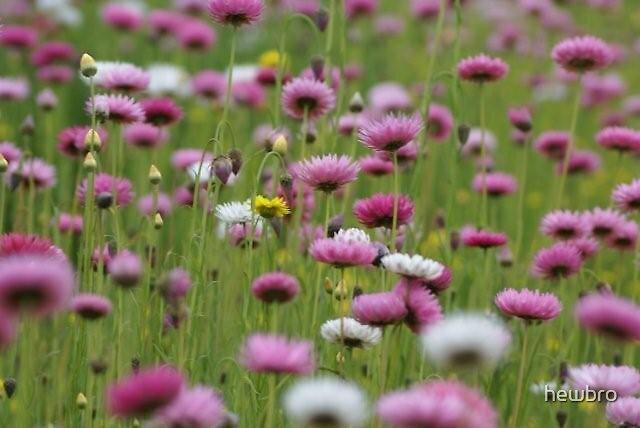 Flower Colour by hewbro