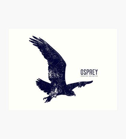 Osprey Taking Flight Art Print