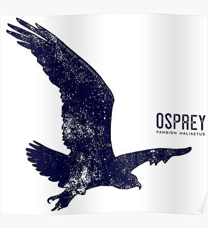 Osprey Taking Flight Poster
