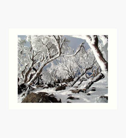 Snowgums 3 Art Print