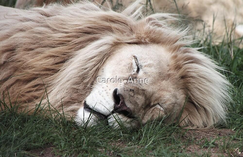 White Lion Sleeping by Carole-Anne