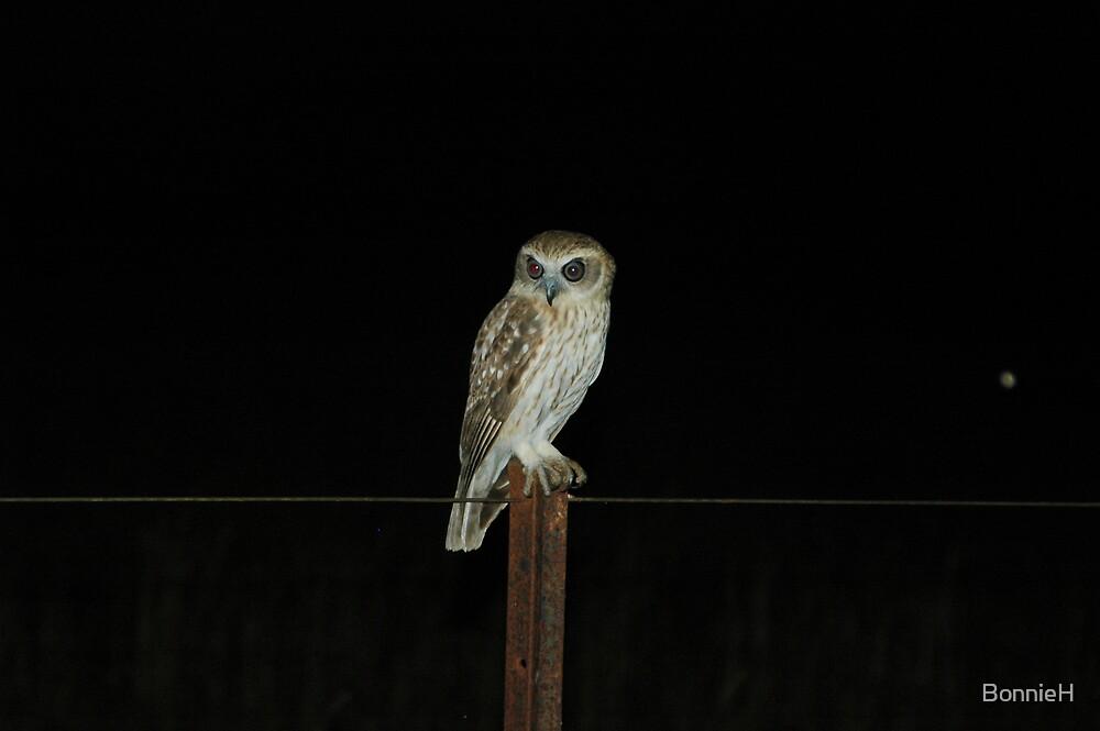 Barking owl by BonnieH