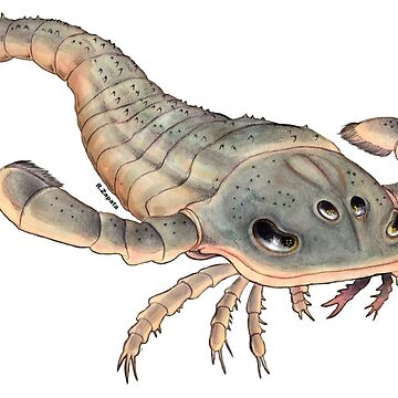 eurypterus by nyctherion