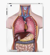 Human Body Model Illustration iPad Case/Skin