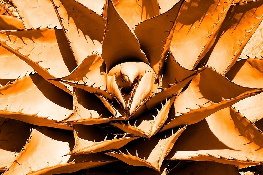 Orange Cactus by Aaron Kittredge