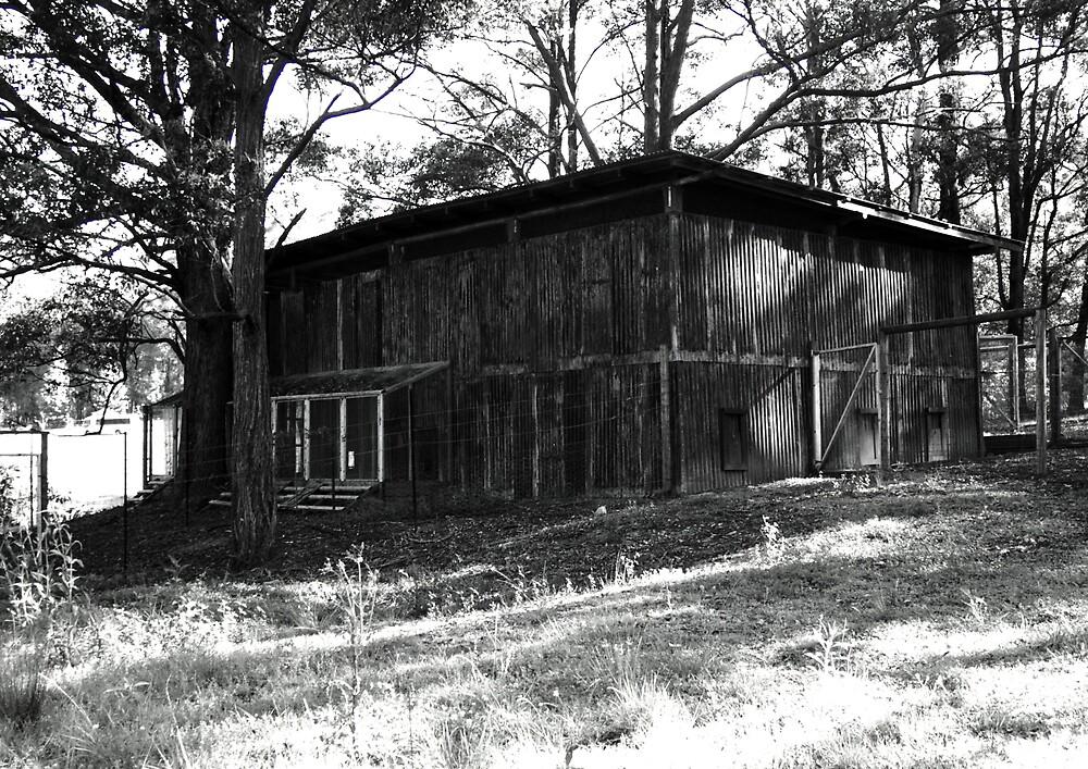 abandoned barn by adam pearson