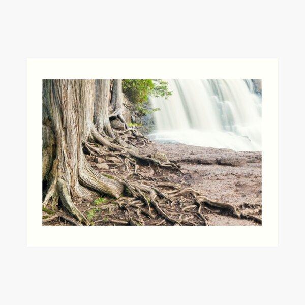 Cedars Framing Gooseberry Falls Art Print
