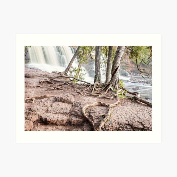 Four Cedars at the Falls Art Print