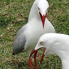 Seagull Kampf von STHogan